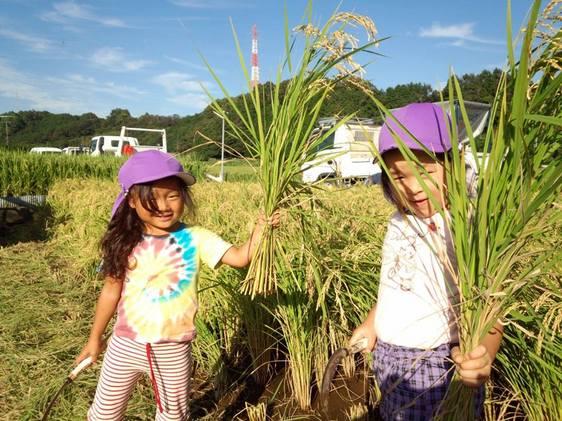 収穫の秋。 農業体験学習