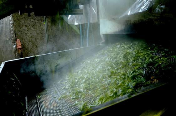 茶業青年団 製茶研修『茶創り人沼津』のサムネール画像