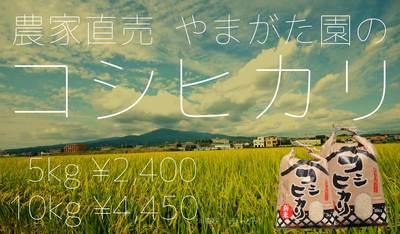 koshihikari-banner.jpg