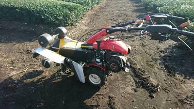 土寄せ作業。 ネギの白い部分を増やすために  土を被せる作業です。