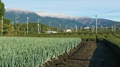 愛鷹山も真っ白です。